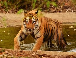 EXPLORE SUNDARBANS TOUR PACKAGE